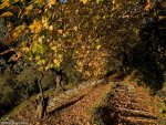 e-pelion-Hiking-path.jpg